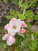 Bague Secret d'Orient Tourmaline Rose